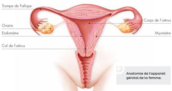 20140818_appareilgenitalfeminin.jpg