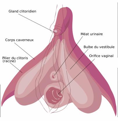 clitoris.png